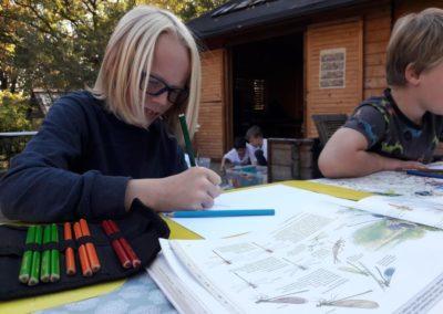 Wenn wir mal nicht wissen, wie zum Beispiel Vögel und Insekten genau aussehen, dann schauen wir in den Naturführern nach. Moritz malt gerade eine Libelle.